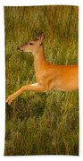 White-tailed Doe Leaping Beach Towel