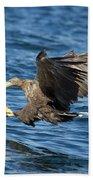 White-tailed Eagle Taking Fish Beach Towel