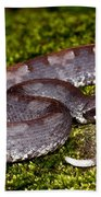 White-tailed Hognose Viper Beach Towel
