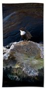 White-throated Dipper Nr 1 Beach Towel