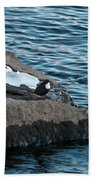 White-throated Dipper Nr 3 Beach Towel