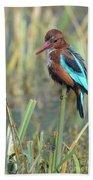 White-throated Kingfisher 13 Beach Towel