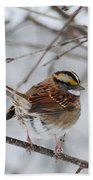 White Throated Sparrow 2 Beach Towel