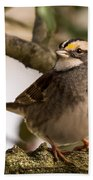 White Throated Sparrow On Branch New Jersey Beach Towel