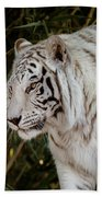 White Tiger Portrait 2 Beach Sheet