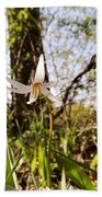 White Trout Lily Beach Towel