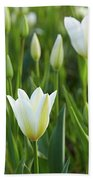White Tulip Beach Sheet