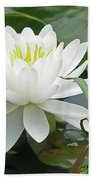 White Water Lily Wildflower - Nymphaeaceae Beach Towel
