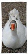 White Wild Duck Sitting On Gravel Beach Towel