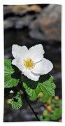White Wild Rose In Big Thompson Canyon Beach Towel
