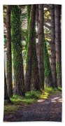 Whiteford Burrows Woods Beach Towel