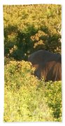 Whitetail Buck Beach Towel