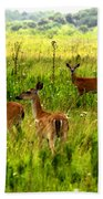 Whitetail Deer Family Beach Towel