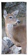Whitetail Deer Beach Towel