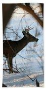 Whitetail Deer Threw The Trees Beach Towel