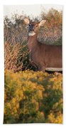 Whitetail Doe Beach Towel