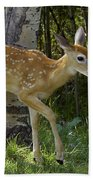 Whitetail Fawn Beach Towel