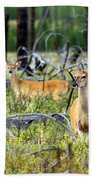 Whitetails Beach Towel