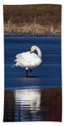Whooper Swan 2 Beach Towel