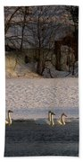 Whooper Swan Nr 14 Beach Towel