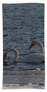 Whooper Swan Nr 2 Beach Towel