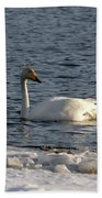 Whooper Swan Nr 3 Beach Towel