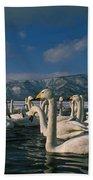 Whooper Swans In Winter Beach Towel