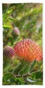 Wild Beautiful Telopea Flower In Sunset Light  Beach Sheet