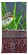 Wild Bird In A Natural Habitat.  Beach Towel