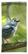 Wild Birds - Gray Catbird Beach Towel