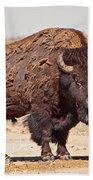 Wild Bison Beach Towel