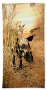 Wild Boar Beach Towel