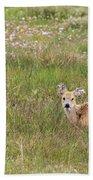 Wild Chinese Water Deer  Beach Towel