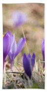 Wild Crocus Balkan Endemic Beach Towel