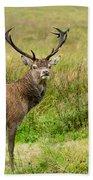 Wild Deer Animals   Beach Towel