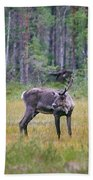 Wild Finnish Forest Reindeer 24 Beach Towel