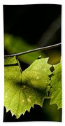 Wild Grape Leaves Beach Towel by Christopher Holmes