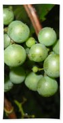 Wild Grapes In August Beach Towel