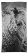 Wild Horse Of Assateague Beach Towel