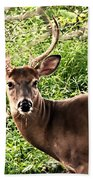 Wild In The Country Beach Towel