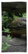 Wild Komodo Dragon Creeping Through Fallen Trees Beach Towel