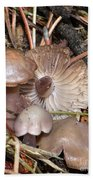 Wild Mushrooms Beach Towel