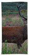 Wild Red Deer Stag Beach Towel