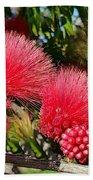 Wild, Red Fluffy Flowers  Beach Towel