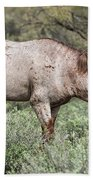 Wild Roan Stallion  Beach Towel