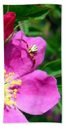 Wild Rose And The Spider Beach Towel