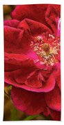 Wild Rose As Oil Beach Towel