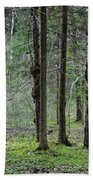 Wild Spring Forest Beach Towel