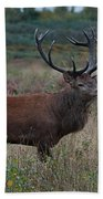 Wild Stag Beach Towel