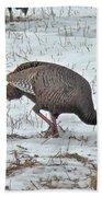 Wild Turkey - Meleagris Gallopavo Beach Towel